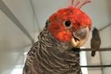 Vzácní bílí i černí papoušci kakadu, ale také tajemný tricha orlí. Začíná EXOTA Olomouc 2018