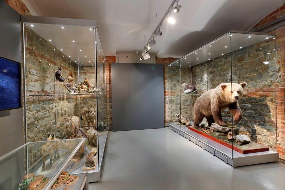 Expozice Příroda Slezska v Historické výstavní budově v Opavě.