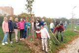 Děti vysázely na Švabinského nábřeží stromky náhradou za stromy zničené vandalem