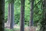 Promítání lesnických filmů či ukázky řemeslných výrobků ze dřeva. Takový bude Lesnický den
