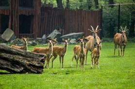 Zoo Ostrava se opět připojuje ke Dni zvířat. Nabídne i komentovaná setkání u některých druhů