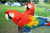 EXOTA Olomouc 2018 ukáže takřka kompletní kolekci papoušků ara, včetně největších arů hyacintových