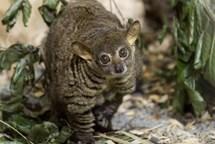 V Zoo Ostrava se narodilo mládě komby Garnettovy