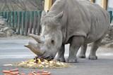 Zoo v Ústí nad Labem si připomněla výročí, kdy do ní dorazili první nosorožci