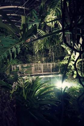 Nenechejte si ujít noční prohlídku skleníku Fata Morgana. Projděte se džunglí, která nespí