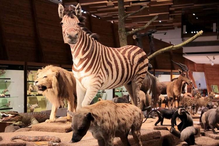 Stálá expozice vás přivede do fascinujícího světa živočichů
