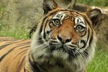 Štědrý den a Nový rok v Zoo Brno