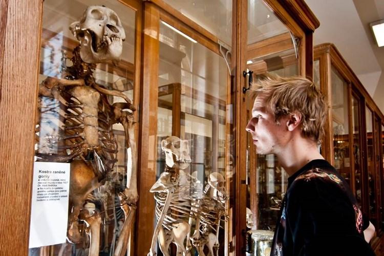Hrdličkovo muzeum člověka přibližuje, jak se vyvíjel celý lidský druh či co se děje s tělem po smrti