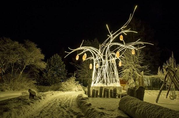 Popis: Rozsvícená baobab v zasněžené zoo ve Dvoře Králové nad Labem.