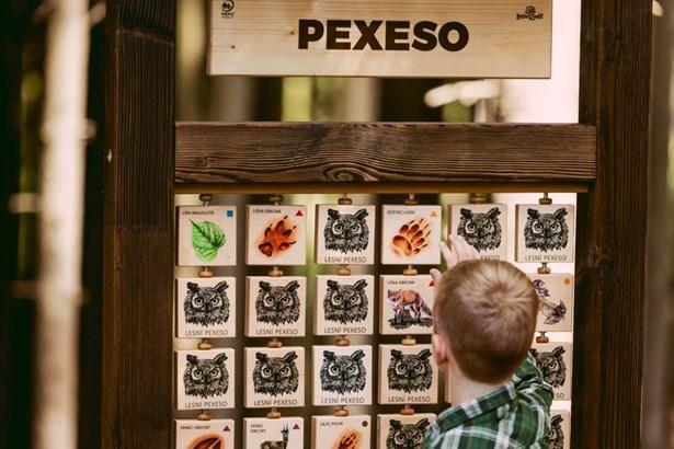 Popis: Pexeso v lesech pod Kletí.