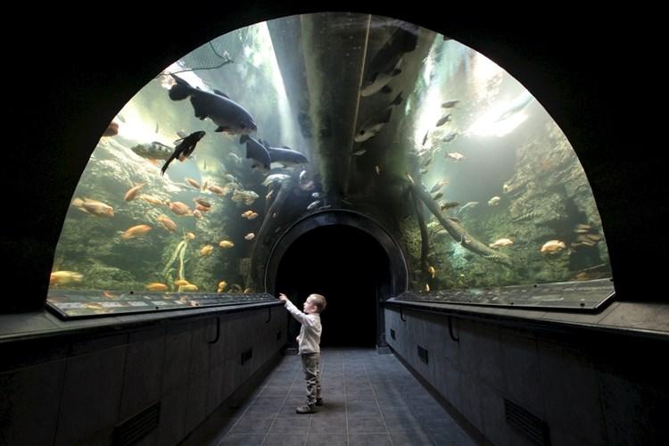 Obří akvárium v Hradci Králové umožňuje prohlédnout si i největší rarity