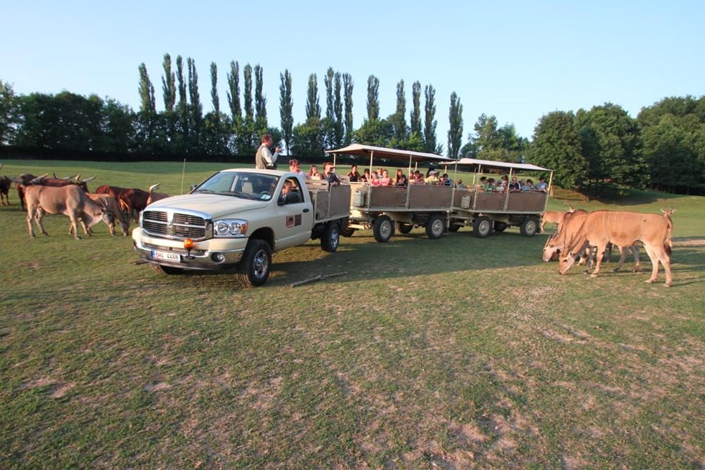 Afrika truck v Safari Parku ve Dvoře Králové nad Labem.