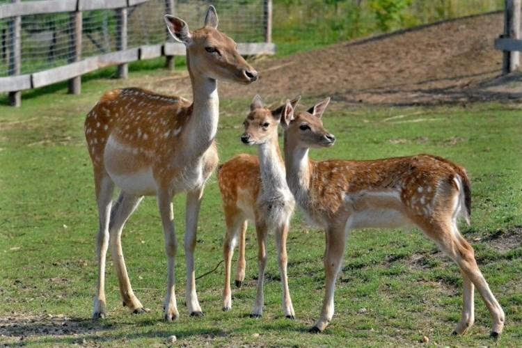 Zoo Chleby ukazuje krom živých zvířat také expozici soch těch, které lidé vyhubili