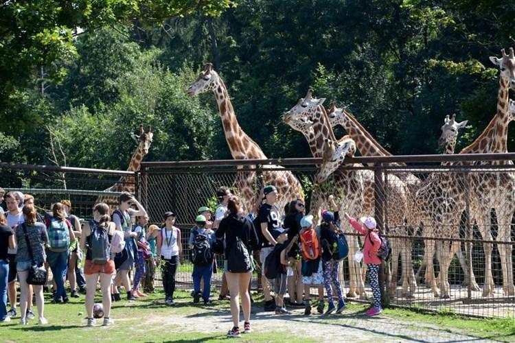 Největší oblibě se v olomoucké zoo těší žirafy, opice a šelmy. Koho bolí nohy, toho sveze Safarivláček