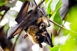 Ve Faunaparku přiblíží život netopýrů. Na programu je i přednáška