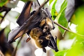 Netopýří noc nabídne za příznivých podmínek odchyt desítek netopýrů