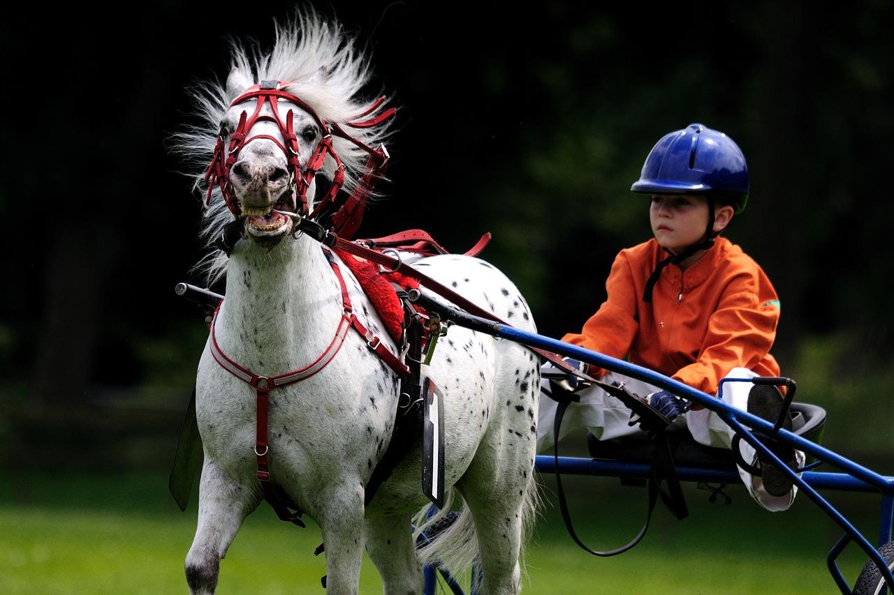Děti koně milují, jezdectví je krásný koníček či sport
