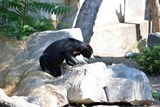 Zvířata v ústecké zoo se ve vedrech zchlazují v bazénku či bahništi