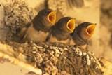 V ostravské zoo zkontrolovali hnízdiště, aby zjistili, kolik mláďat se podařilo vyvést