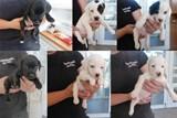 Šest kouzelných štěňat skončilo v útulku. Pejsci nyní čekají na nové majitele