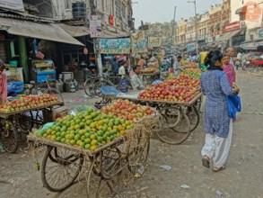 Vydejte se do divoké a nespoutané Indie