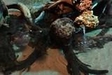 Trnuchy skvrnité jsou novým lákadlem Rajských ostrovů