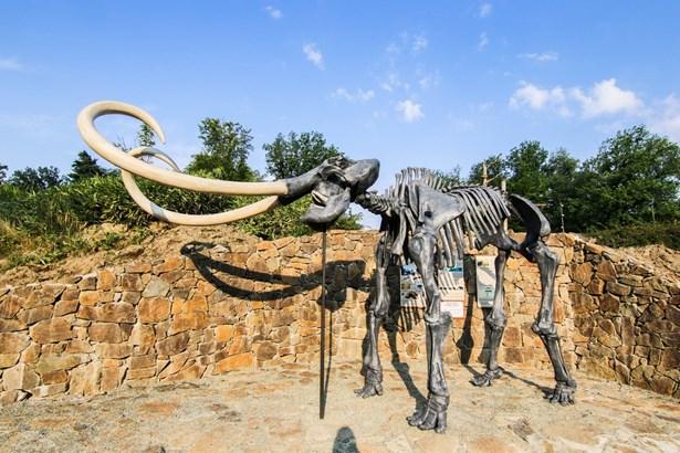Popis: Kosterní model mamuta srstnatého v Zoo Ostrava.