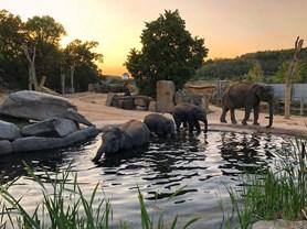 Sloni v Zoo Praha začali trávit noci ve venkovních výbězích
