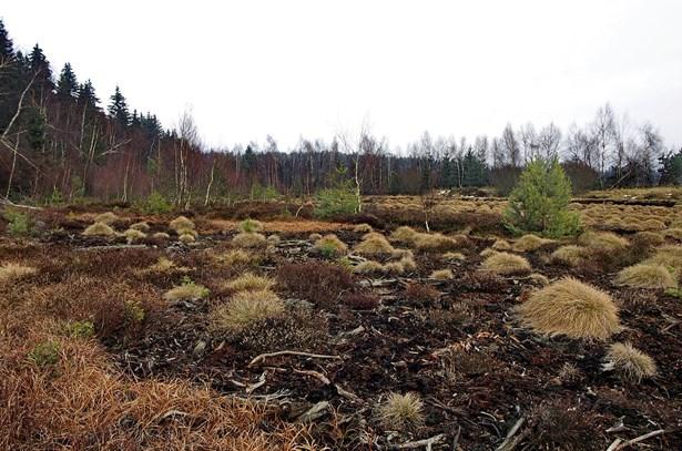 Popis: Krásenské rašeliniště.