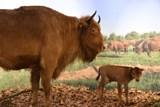 Výstava zaměřená na největší volně žijící zvířata v Evropě ukazuje i lebku zubra