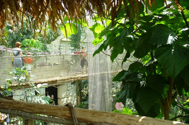 Popis: Tropická hala Yucatan.