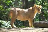 Zoo Brno oslaví Světový den zvířat