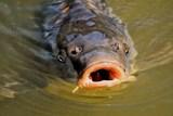 Rybáři zřídili transparentní účet na pomoc Bečvě