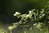 Ostravská zoo láká v létě i na zelenou včelí pagodu