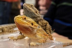Výstavní a prodejní setkání chovatelů exotických zvířat v Praze