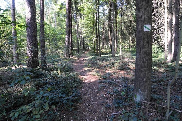 Naučná stezka má deset zastavení. Seznámí s živočichy i vodou v lese