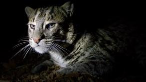 Vydejte se objevovat tajemství večerního života v Zoo Praha