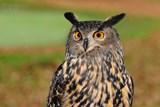 Ve Sluňákově si můžete pohladit sovu a taky se s ní vyfotit
