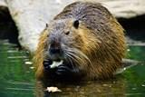 Kterak se bobři v Domě přírody usadili