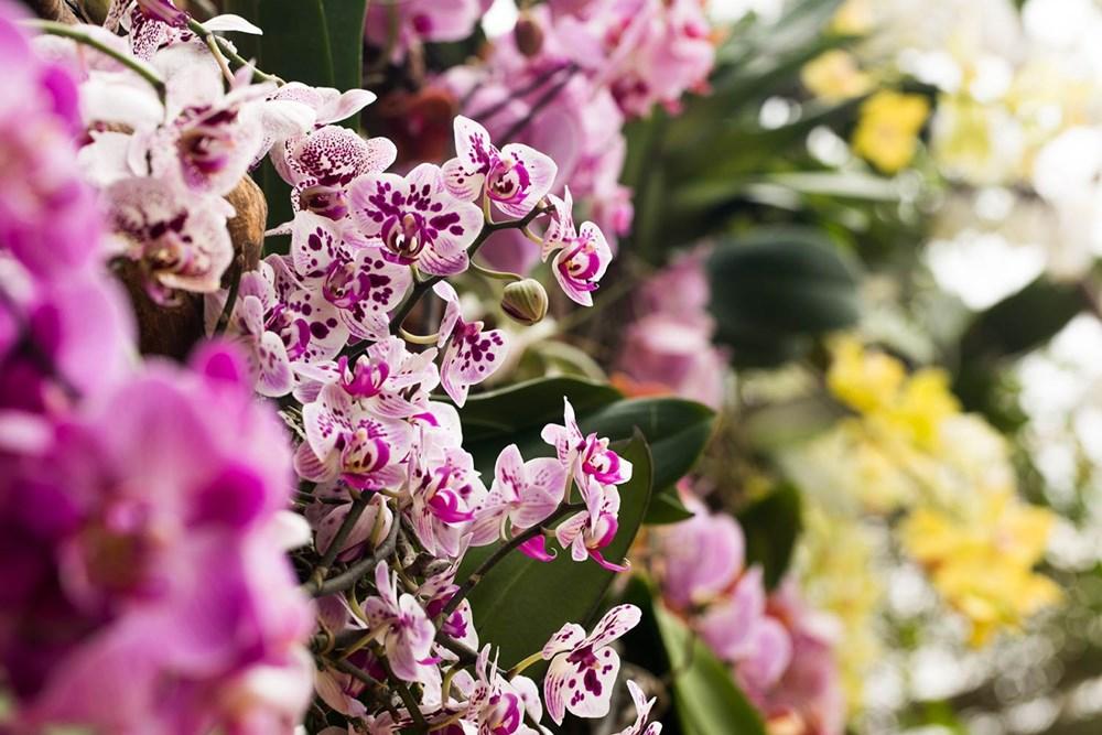 Popis: Výstava orchidejí v Botanické zahradě hl. m. Prahy.