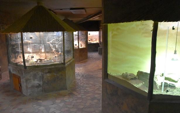Popis: Terárium v chomutovském zooparku.