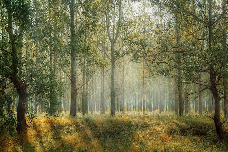 Výstava přibližuje les jako místo, ve kterém je skryto nepřeberné množství malých světů