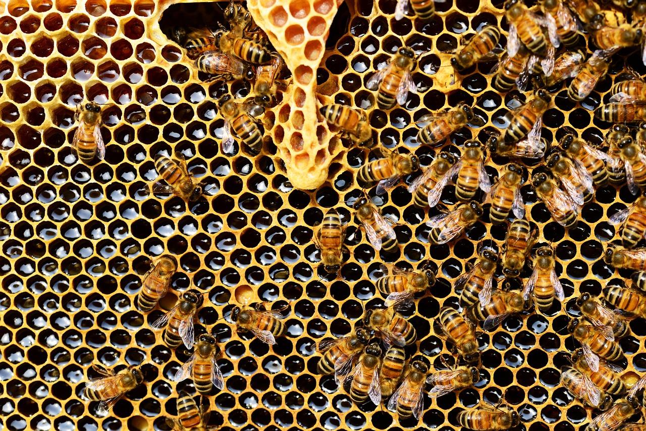 Nový Jičín ukazuje školákům život včel
