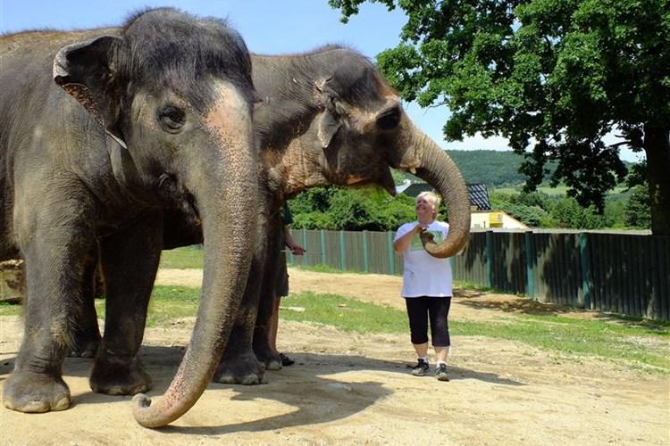 Ústecká zoo chová přes tisíc zvířat. Mnoho z nich je velice vzácných