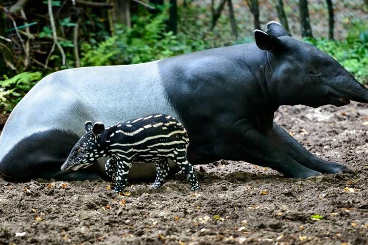 Zlínská zoo patří k nejnavštěvovanějším turistickým místům v Česku