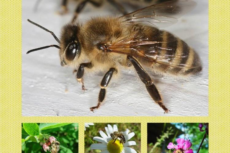 Výstava přiblíží celý včelařský rok s jeho zákonitostmi